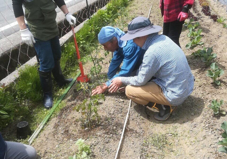 ninoファーム|苗植え付け